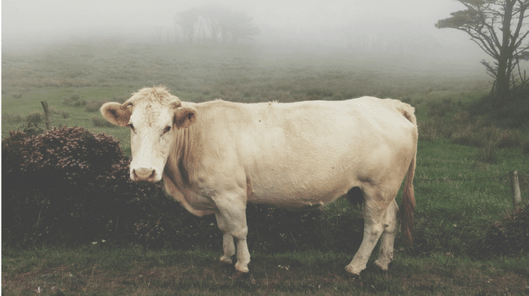 7-Steps-to-Help-Those-who-Ruminate-cow-mental-health